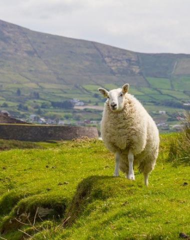 Mit friLingue in Irland englisch lernen